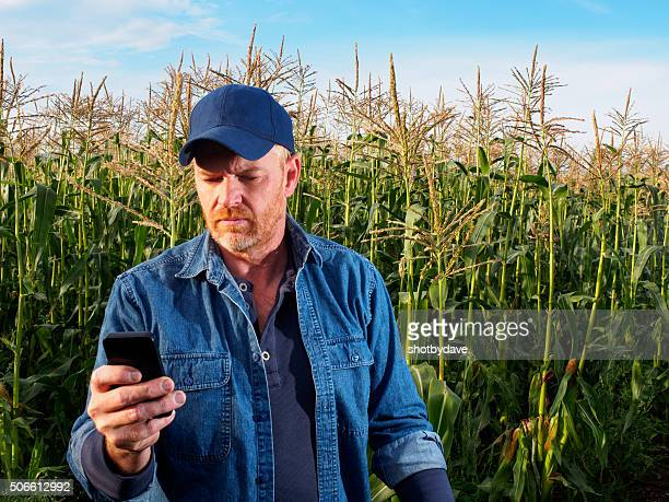 Farmer in a Cornfield using a Smart Phone for Communication