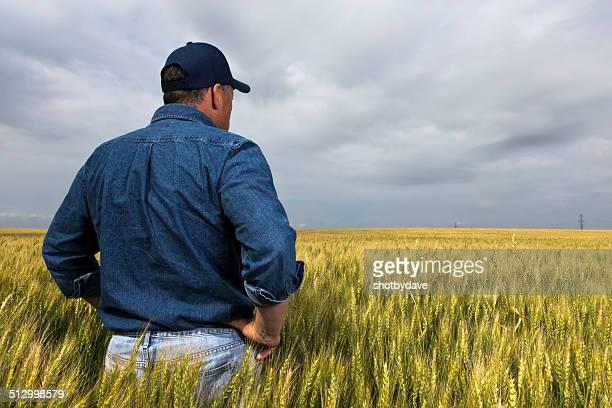 Farmer in a Field