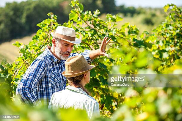farmer in a vineyard having a discussion - viniculture stock pictures, royalty-free photos & images