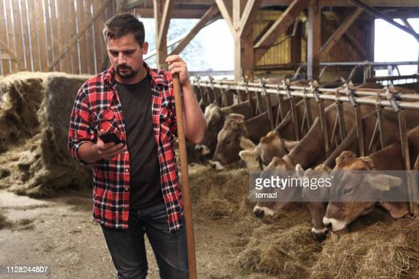 farmer in bar using smart phone - agricultural occupation stock pictures, royalty-free photos & images