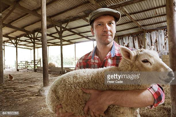Farmer in barn holding sheep
