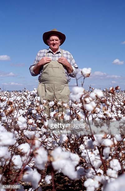 Farmer in Cotton Field