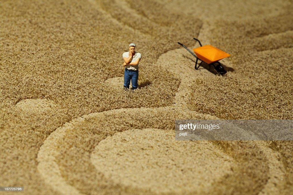 Farmer in crop circle : Stock Photo