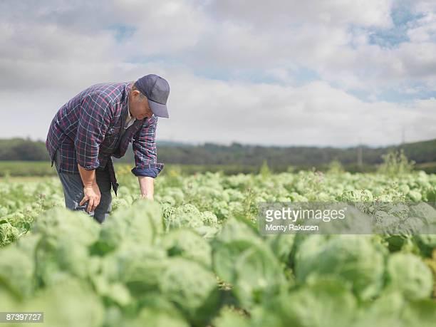 Farmer In Crop Field