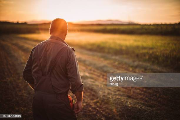 farmer in field - farmer stock pictures, royalty-free photos & images