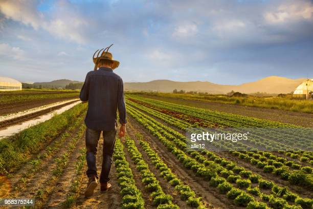 farmer in field - organic farm stock pictures, royalty-free photos & images