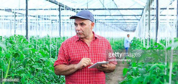 Farmer In Greenhouse  Using Digital Tablet