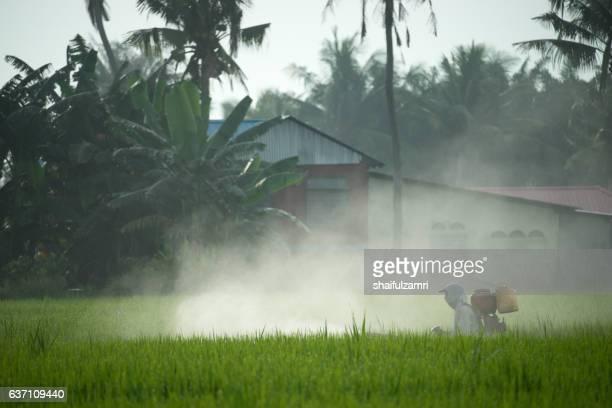 farmer in paddy field - shaifulzamri stockfoto's en -beelden