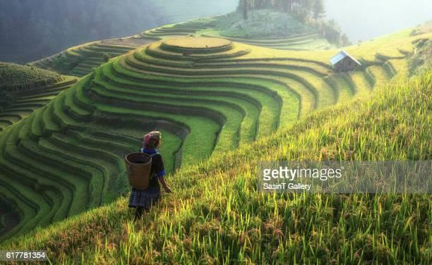 Farmer in rice terrace