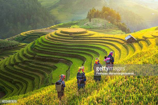 farmer in rice terrace vietnam come back to home - vietnam stockfoto's en -beelden