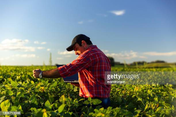 farmer in soybean crop. - brazil stock pictures, royalty-free photos & images