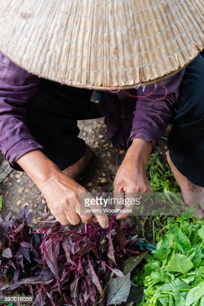 farmer in straw hat holding vegetables at market - chapeau chinois photos et images de collection