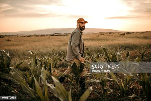 farmer in the field - farmer stock pictures, royalty-free photos & images