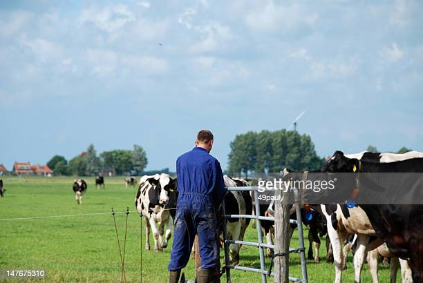 Farmer in the pasture with Holstein cows