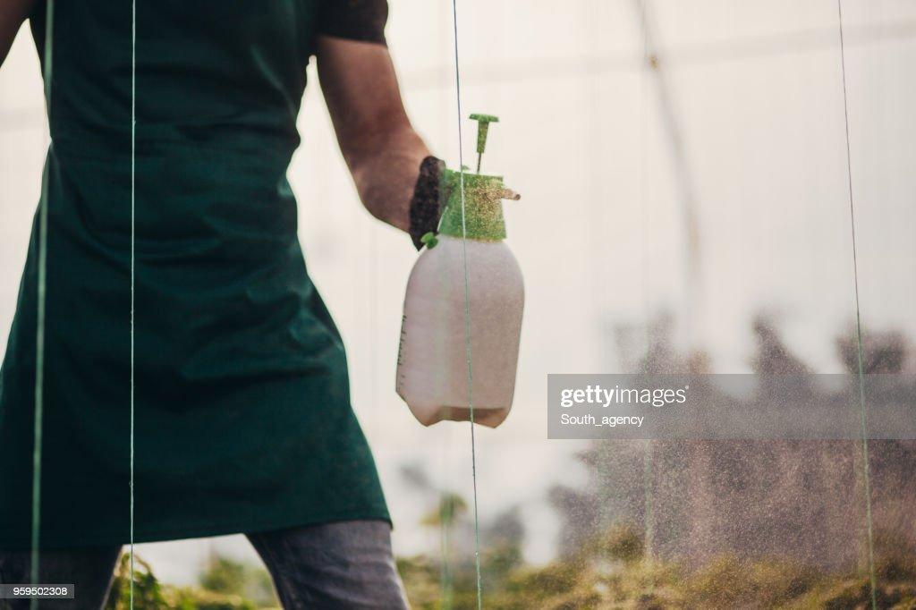 Landwirt im Gemüsegarten : Stock-Foto