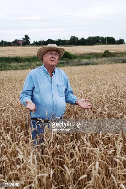 Farmer in Wheat