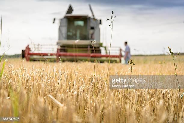 farmer inspecting combine harvester in field of organic barley - monty rakusen stock-fotos und bilder
