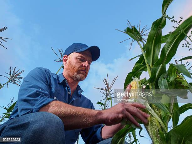 Landwirt Inspektion Corn