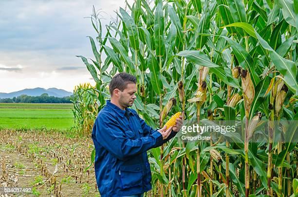 Landwirt Inspektion Corn