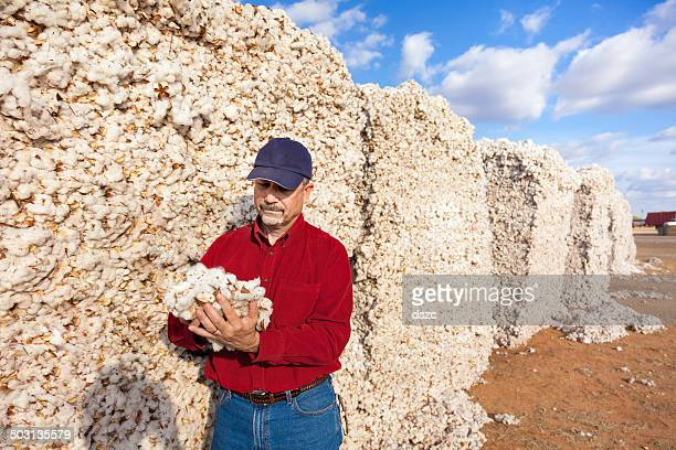 farmer inspects cotton quality in harvested module