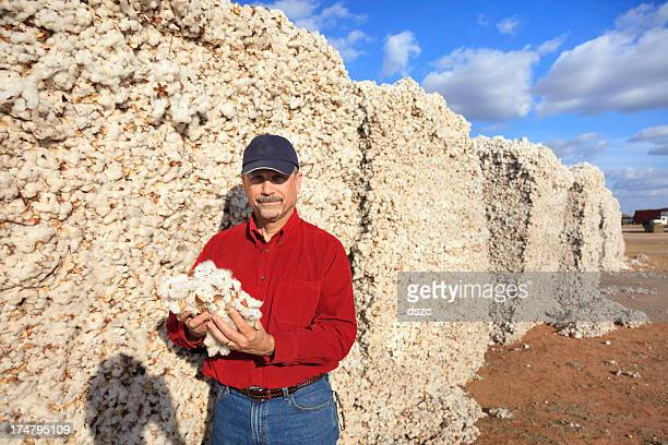 farmer inspects quality in the cotton modules - cotton harvest stock pictures, royalty-free photos & images