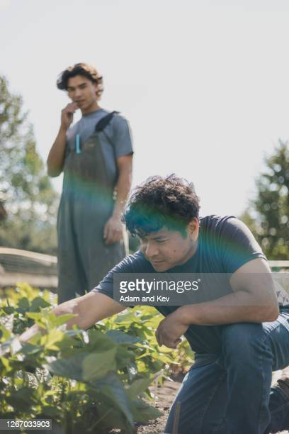 farmer inspects vegetable crop with son in background - genderblend stock pictures, royalty-free photos & images