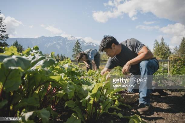 farmer inspects vegetable with son in background - zuidoost aziatische etniciteit stockfoto's en -beelden