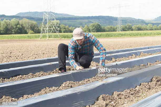 farmer installing soil fumigation film to ploughed field - sigrid gombert 個照片及圖片檔