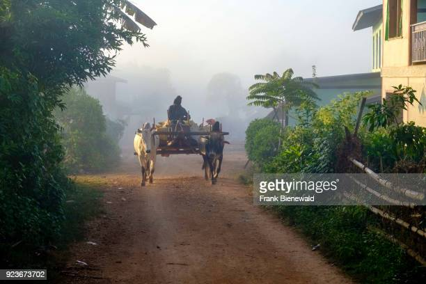 A farmer is driving his oxcart a village in the hills of the tribal area