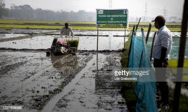 A farmer is growing rice in a training center for rice cultivation in the fields of Manoha Gaon on February 27 2020 in Guwahati India