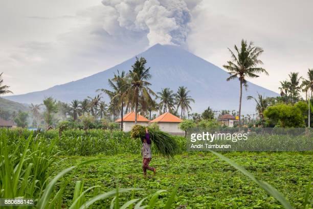 KARANGASEM BALI INDONESIA NOVEMBER 28 A farmer is seen carrying grass while Mount Agung spews heavy volcanic ash on November 28 2017 in Karangasem...
