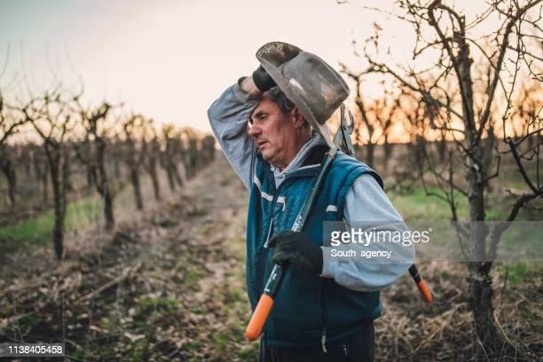 bauer ist es leid, bäume in obstgarten schneiden zu lassen - anstrengung stock-fotos und bilder