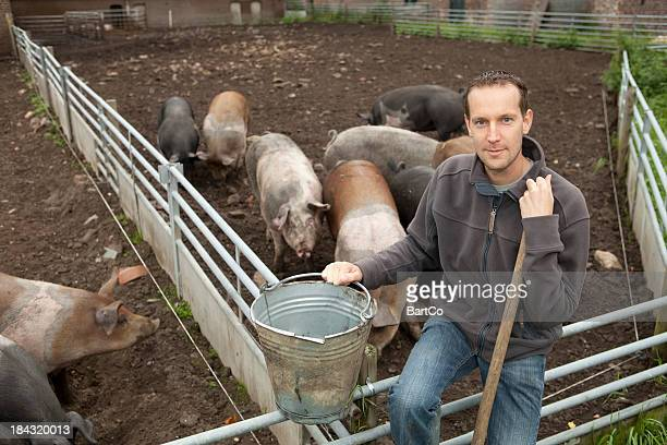 Farmer is working on a free range with pigs.