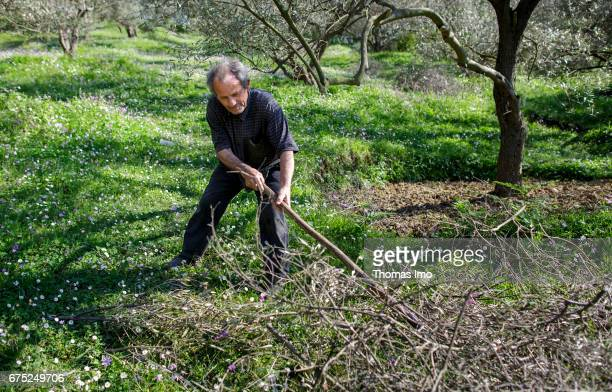 A farmer is working on the Subashi plantation Here olives are cultivated for the production of olive oil on March 28 2017 in Tirana Albania