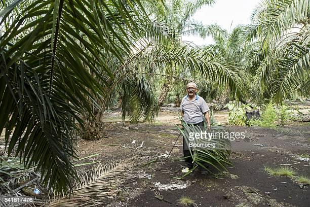 Farmer Isman Abdul Karim standss for a photograph at an oil palm plantation in Kampung Raja Musa Selangor Malaysia on Thursday June 9 2016 Malaysian...