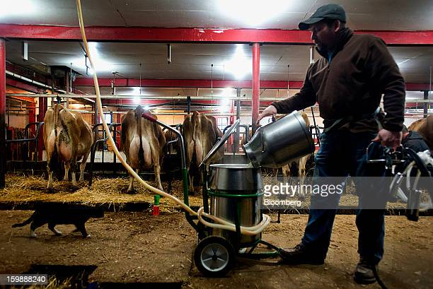 Farmer Jay Young dumps freshly extracted milk from cows into a holding tank inside a tie stall barn at Young's Jersey Dairy Farm in Yellow Springs...