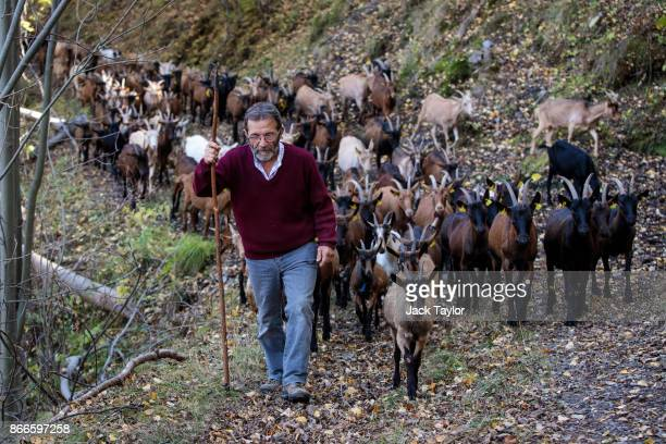 Farmer Jesus Caravaca age 64 takes his herd of goats to graze in the mountains on October 25 2017 in Gavas Spain Catalonia is one of 17 autonomous...
