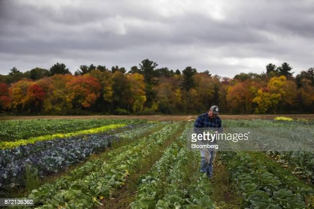 Farmer Jim Ward owner of Wards Berry Farm walks through a field of crops at Wards Berry Farm in Sharon Massachusetts US on Tuesday Oct 24 2017 An...