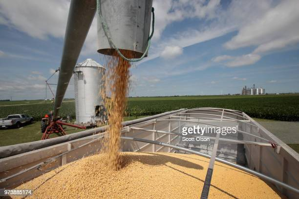 Farmer John Duffy loads soybeans from his grain bin onto a truck before taking them to a grain elevator on June 13 2018 in Dwight Illinois US soybean...