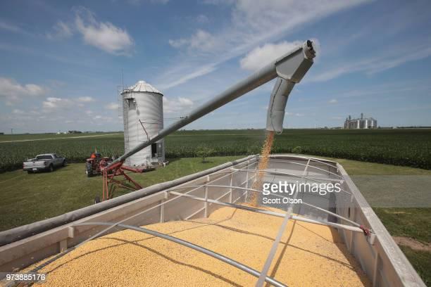 Farmer John Duffy loads soybeans from his grain bin onto a truck before taking them to a grain elevator on June 13 2018 in Dwight Illinois US soybean...