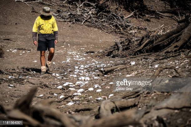 Farmer Johnnie McKeown walks near the shells of dead mussels lying in the dried-up bed of the Namoi River located on the outskirts of his...