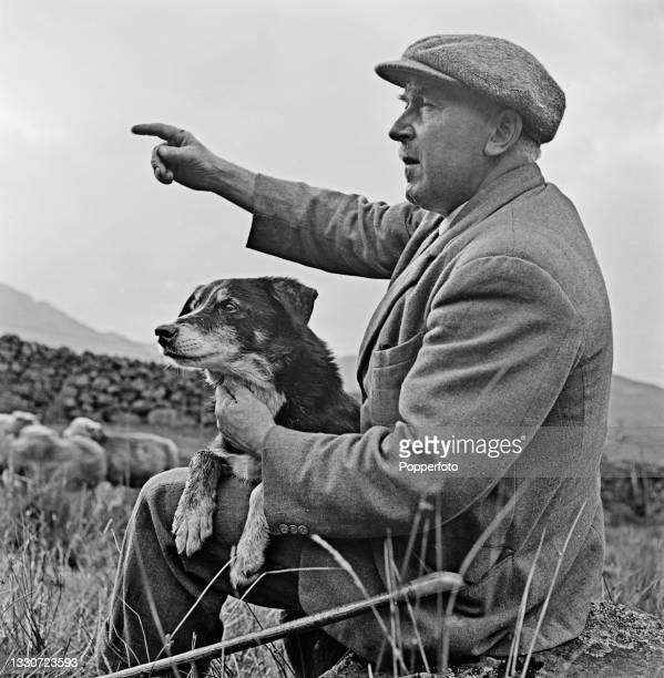 Farmer Joseph Relph instructs his sheepdog Moss to look for any sheep in distress in fields on his farm at Threlkeld, near Keswick in Cumberland,...