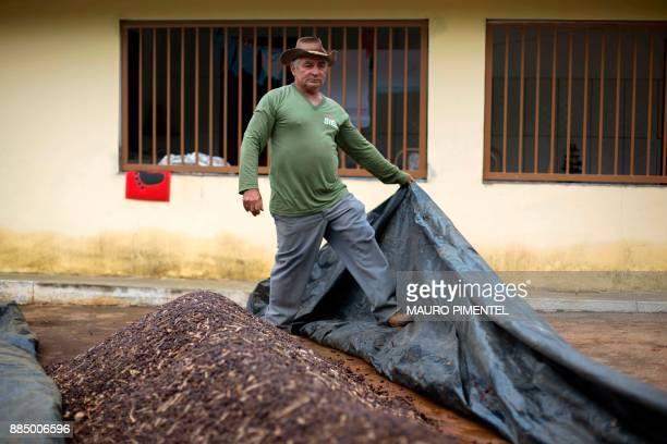Farmer Josias Gomes covers ordinary coffee beans on his family farm located in Forquilha do Rio, municipality of Dores do Rio Preto, Espirito Santo,...