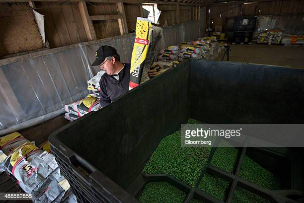 Farmer Kent Bickett loads seed corn into a bulk bin in a barn in Malden Illinois US on Tuesday May 6 2014 This year's record advance in crop prices...