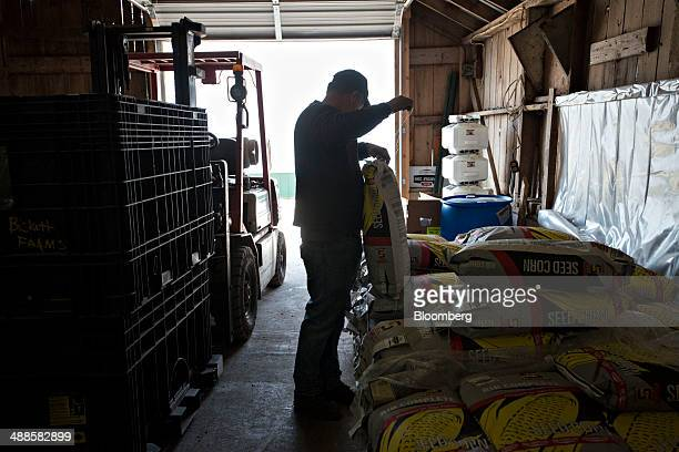 Farmer Kent Bickett sorts seed corn in a barn in Malden Illinois US on Tuesday May 6 2014 This year's record advance in crop prices is drawing...