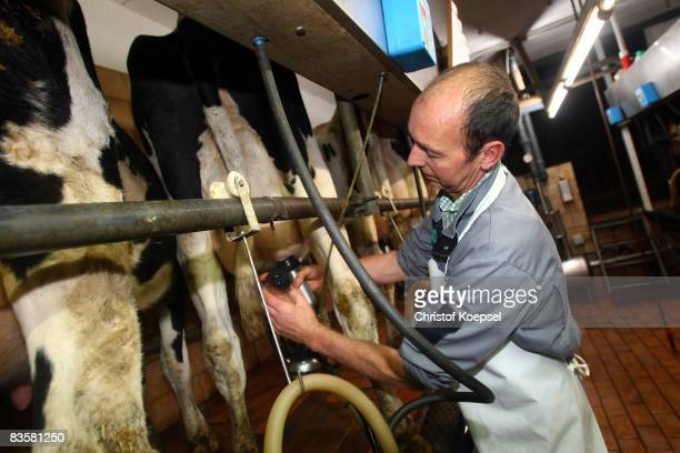 Farmer Klaus Wieden controls the milk machine at the farm BaumhoeggerWieden on November 6 2008 in Imbach near Leverkusen Germany Big discounters like...