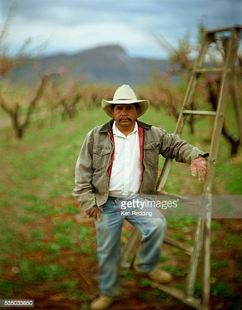 farmer leaning on ladder - migrant worker stock pictures, royalty-free photos & images