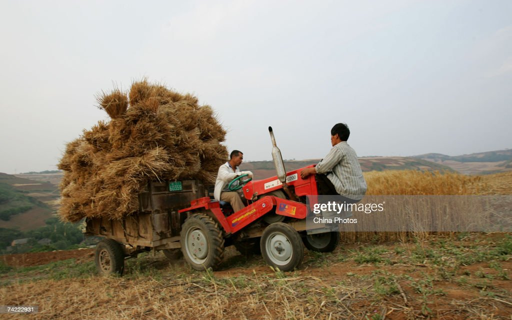 A farmer loads reaped wheat crop on a truck during the summer crop season May 21, 2007 in Xian of Shaanxi Province, China. China's Agricultural ministry is concerned that a continuing drought will hurt this summer?s wheat crops.