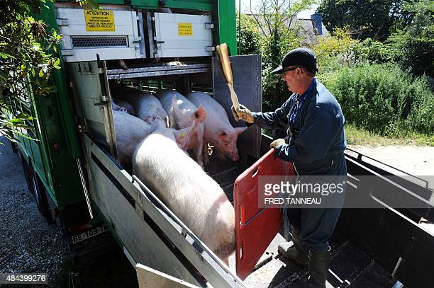 A farmer loads sows on a truck to go to a slaughterhouse in Locronan western France French pig farmer JeanJacques Louboutin 37 years old will soon...