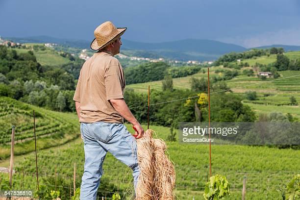 Farmer looking at his vineyards